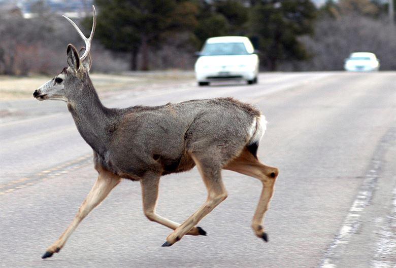 Washington constrói ponte para proteger animais selvagens de autoestrada