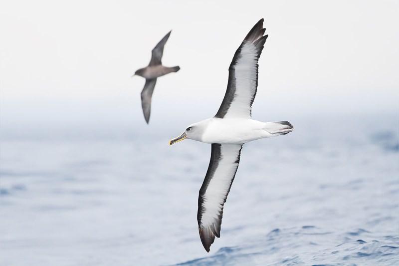 Pesca industrial está a matar à fome as aves marinhas, diz cientista