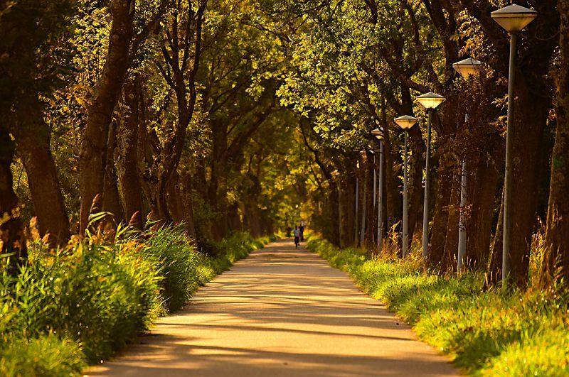 Plantar árvores nas cidades pode ajudar a prevenir ataques de asma