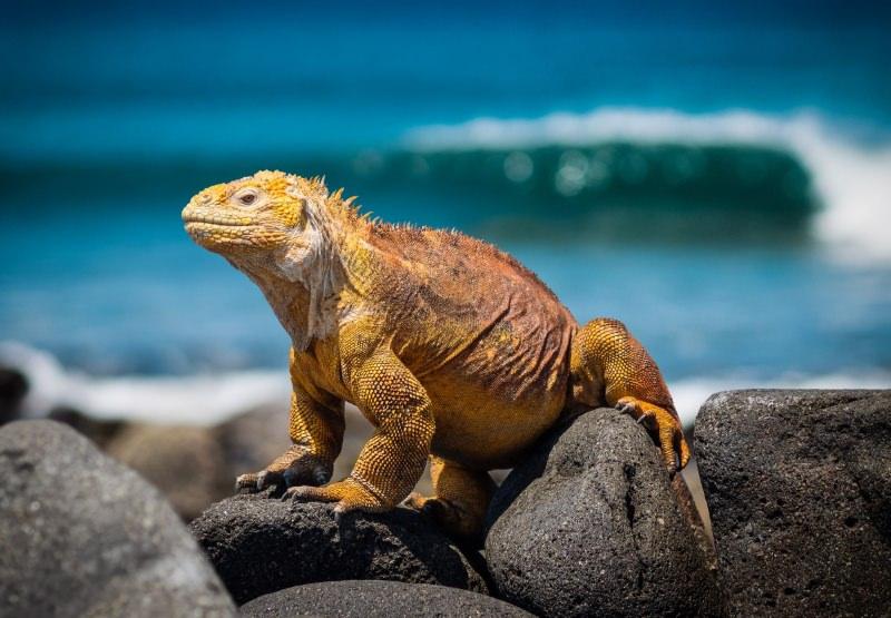 Galápagos proíbem fogo de artifício para proteger fauna das ilhas