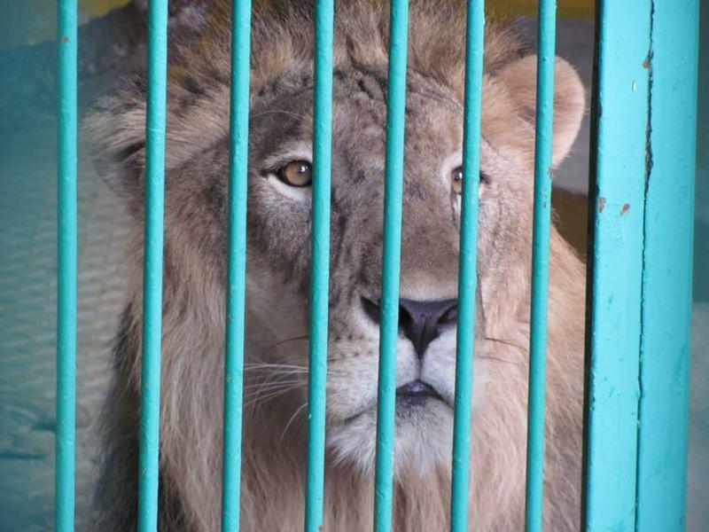 Bilbau proíbe os circos com animais selvagens