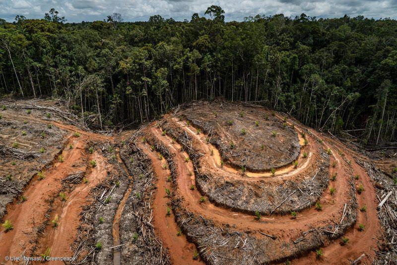 Noruega vai proibir o óleo de palma associado à destruição de florestas tropicais