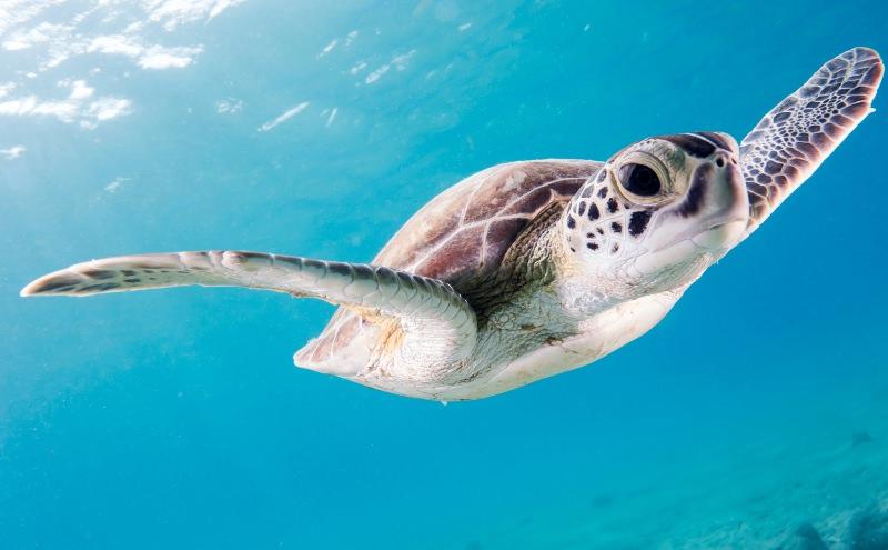 "Tartarugas expostas a níveis ""extremos"" de microplásticos no Mediterrâneo"