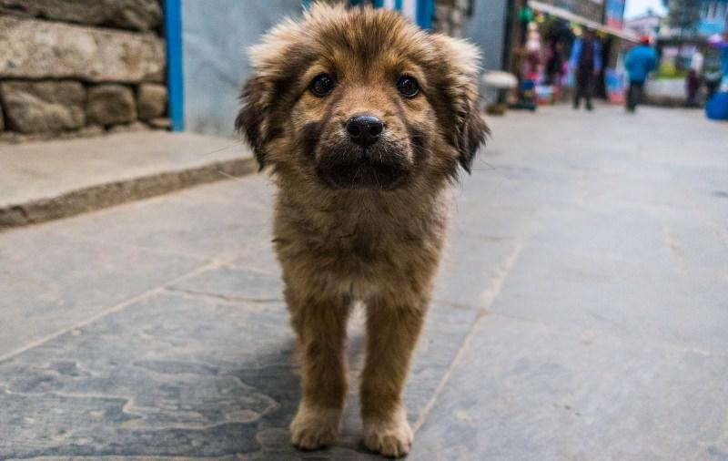 Rússia proíbe abate de animais vadios, restringe circos e posse de animais selvagens