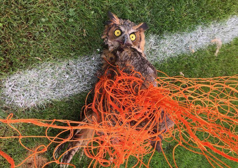 Porque as redes das balizas de futebol podem ser fatais para os animais