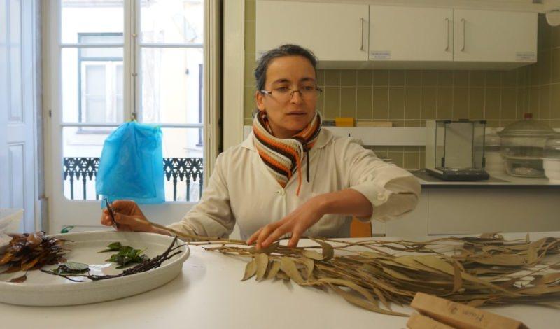 Cientista de Coimbra lidera estudo pioneiro sobre o impacto dos eucaliptos nos riachos