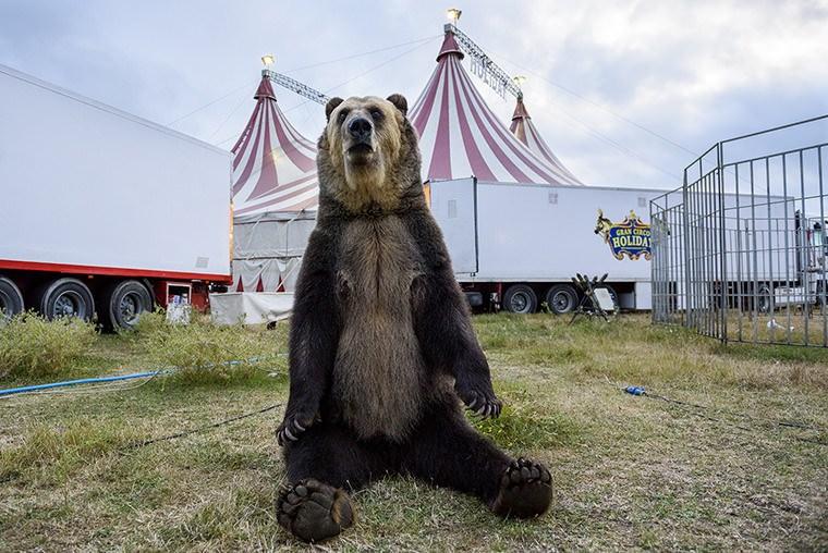 Havai proíbe os circos com animais selvagens