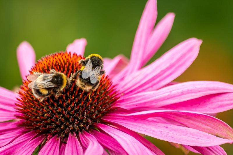 Escolha alimentos biológicos para ajudar a travar colapso dos insetos, diz cientista