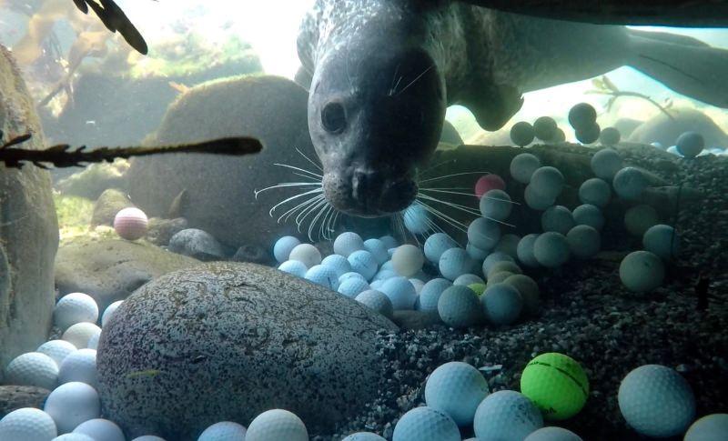 Como o golfe está a poluir o mar e a pôr em risco os animais marinhos