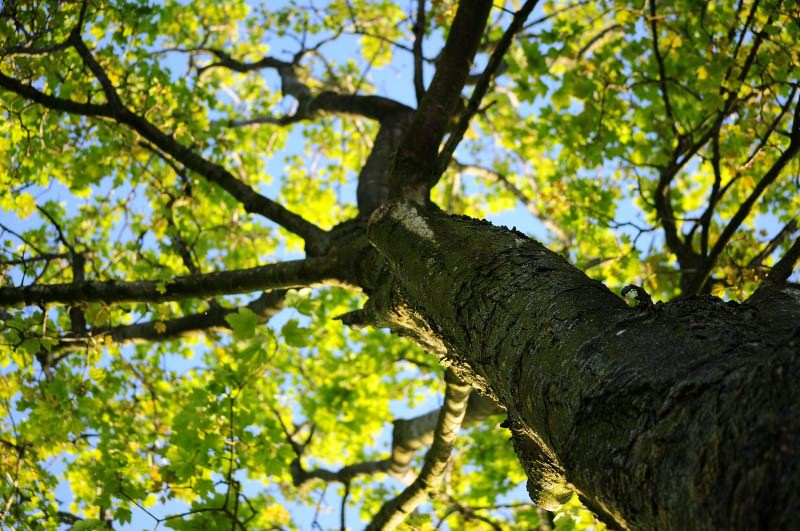 Bruxelas vai plantar uma árvore nova por cada bebé que nascer na cidade
