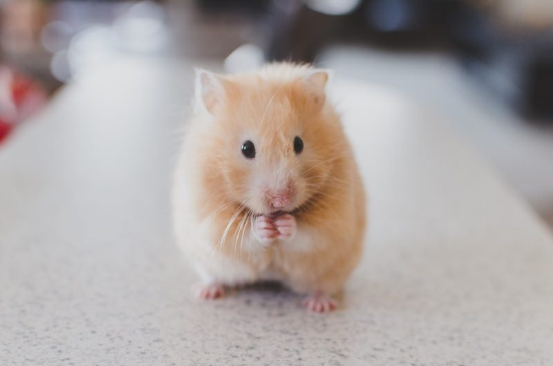Kellogg's acaba com os testes em animais, após 65 anos