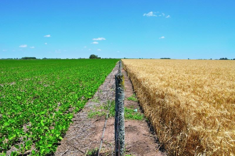 Monoculturas de trigo e soja