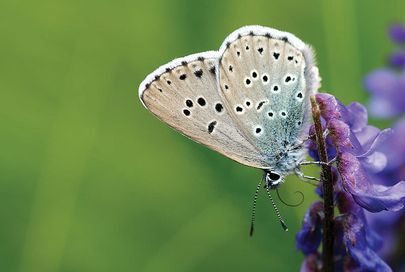 Número de borboletas na Holanda cai 84% em 130 anos