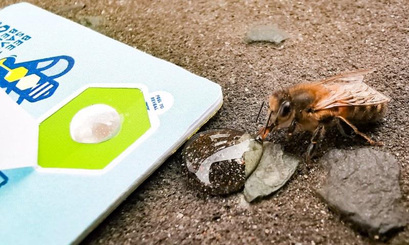 Este cartão serve para reanimar abelhas exaustas e pode levá-lo na carteira: Bee Saviour