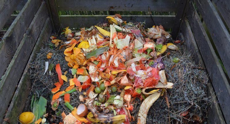 Portugal vai ter brevemente um contentor castanho para o lixo orgânico