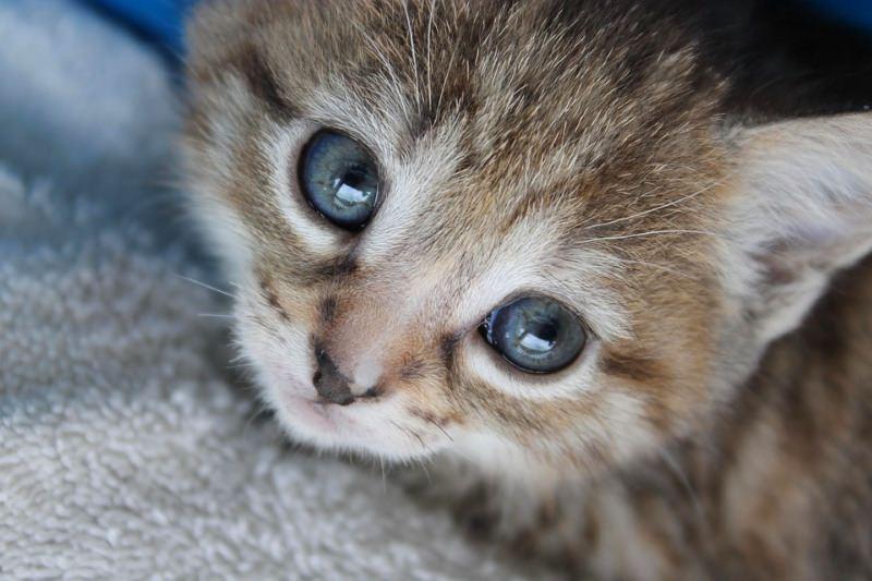 Governo dos EUA acaba com teste em gatos que matou milhares de animais