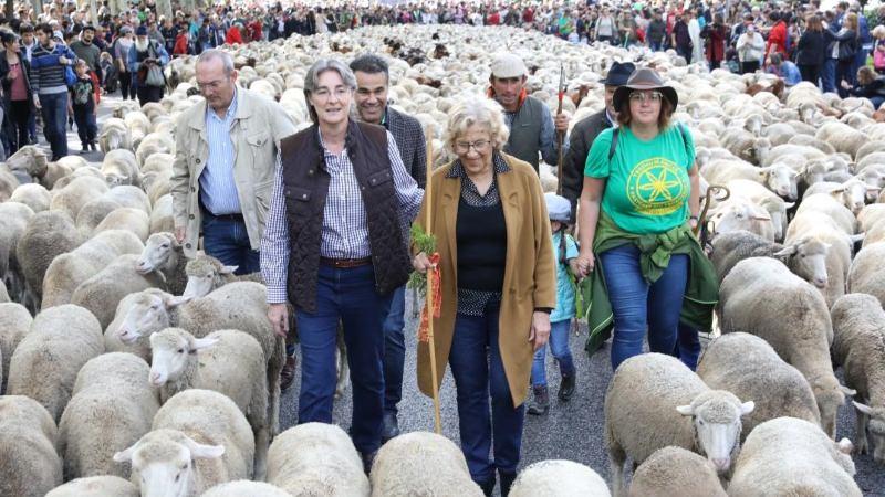 Ovelhas e Manuela Carmena, acompanhada pela vice-presidente da Câmara da capital espanhola, Marta Higueras