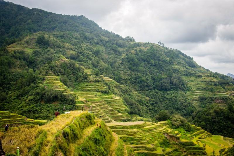 Alunos nas Filipinas vão ter de plantar 10 árvores para poderem passar de ano