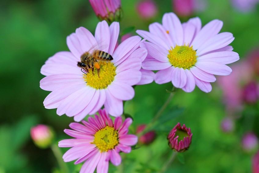 """Londres está a plantar uma """"estrada"""" de flores silvestres de 11 km para as abelhas"""