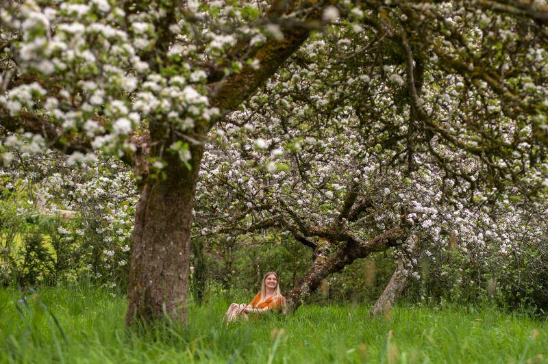 68 pomares vão ser criados na Inglaterra e Gales para dar habitat a aves e insetos