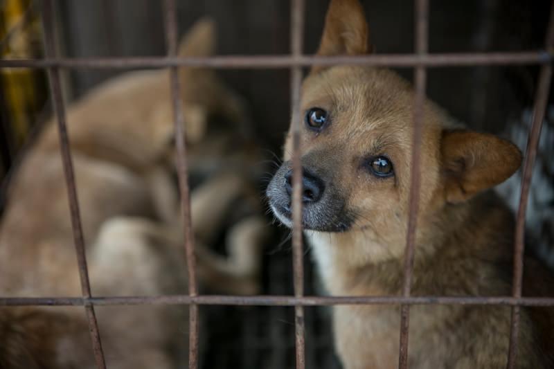 Um dos maiores mercados de carne de cão da Coreia do Sul vai fechar e ser convertido em parque