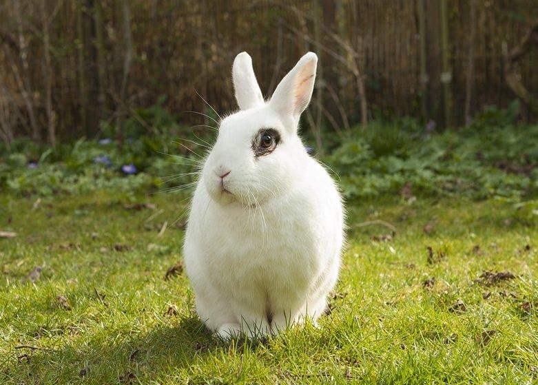 Nevada proíbe venda de cosméticos testados em animais