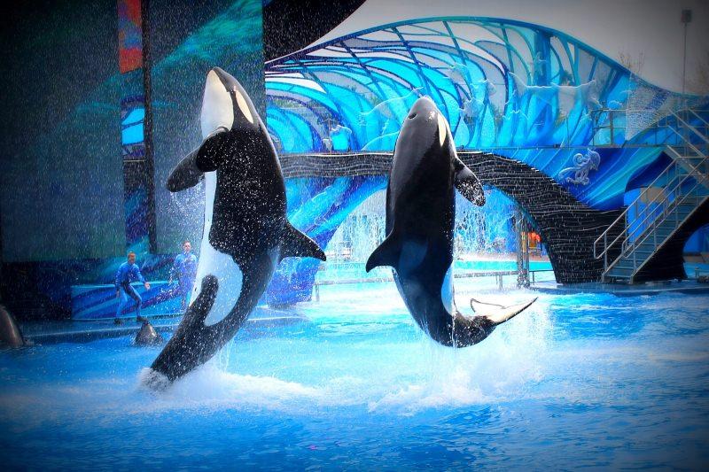 Canadá proíbe que baleias e golfinhos sejam mantidos em cativeiro