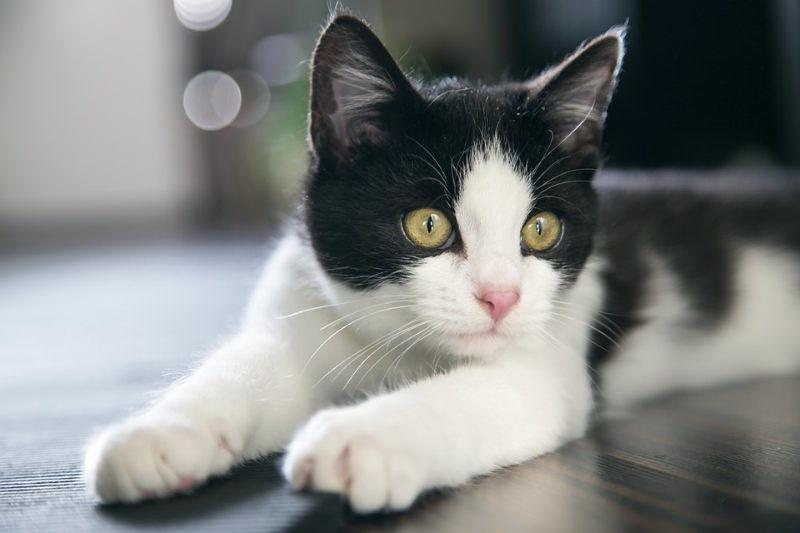 Nova Iorque proíbe a remoção das unhas dos gatos