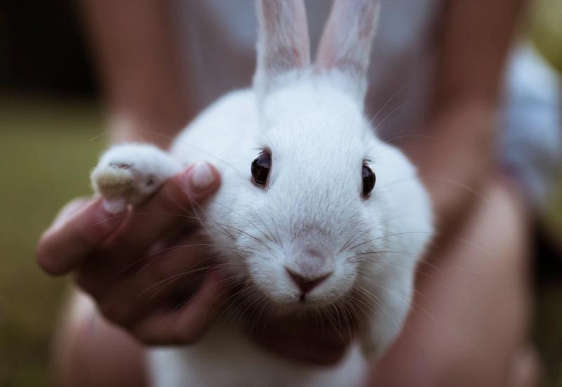 Illinois proíbe a venda de cosméticos testados em animais