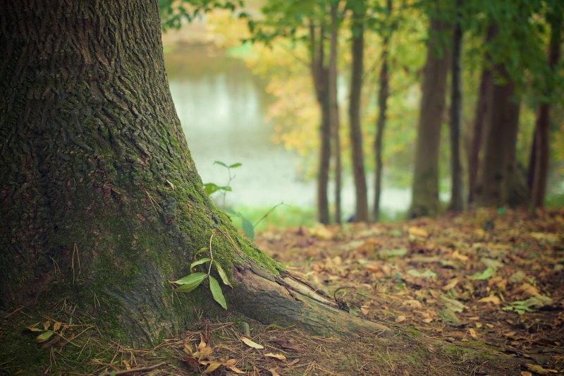 Alemanha: 547 milhões de euros para recuperar florestas