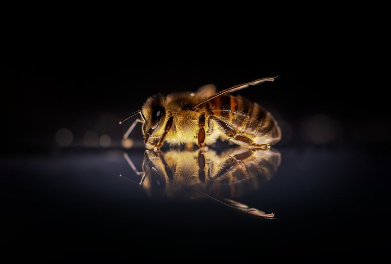 Quer ajudar a salvar as abelhas selvagens? Proteja a urze