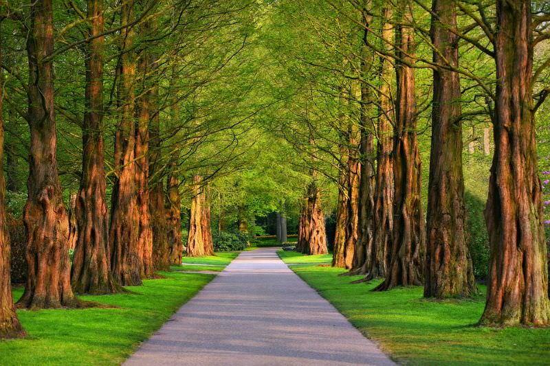 Cidades devem plantar árvores para reduzir uso de ar condicionado, diz estudo