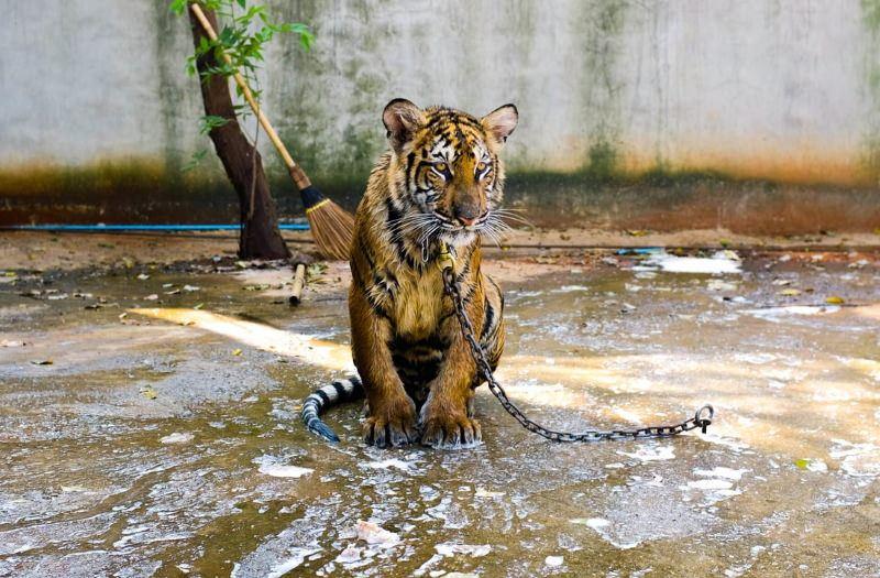 Comércio mundial de vida selvagem afeta uma em cada cinco espécies
