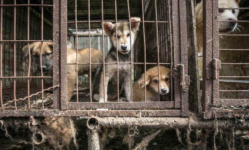 Capital da Coreia do Sul acaba com os matadouros de cães