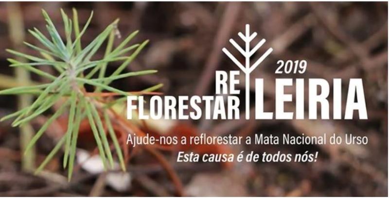 Cerca de 20 mil árvores vão ser plantadas na Mata Nacional do Urso