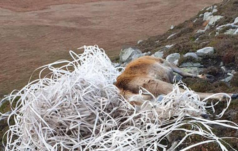 Veado morre após ficar preso a um emaranhado de lixo plástico que deu à costa