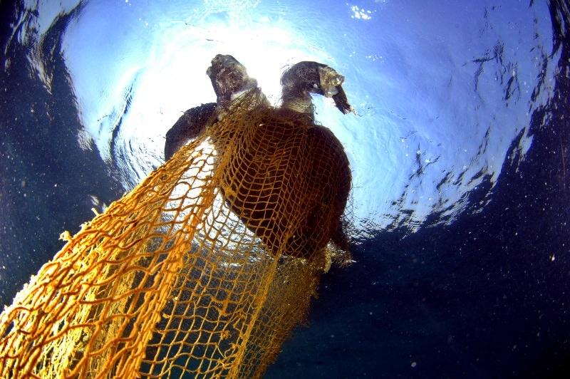 640 mil toneladas de material de pesca são abandonadas nos oceanos por ano