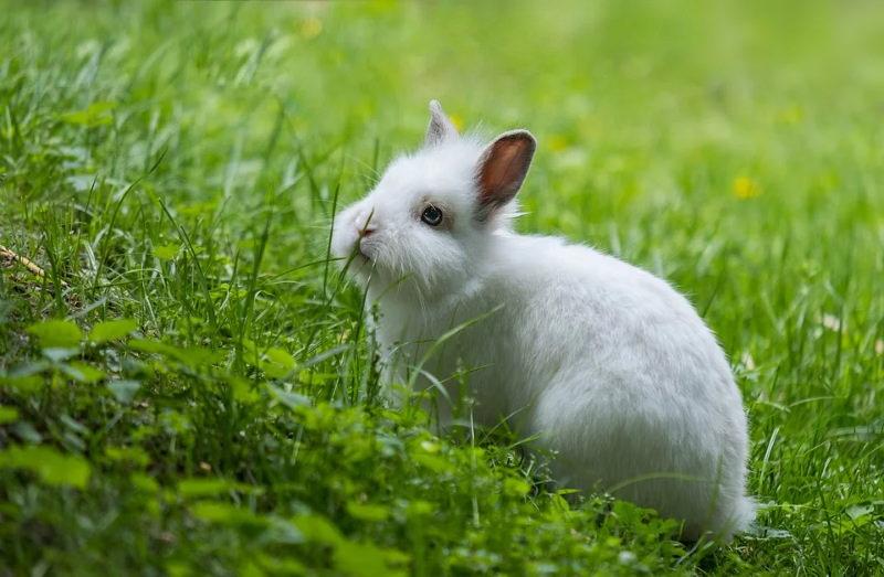 Avon deixa de testar cosméticos em animais na China e no resto do mundo