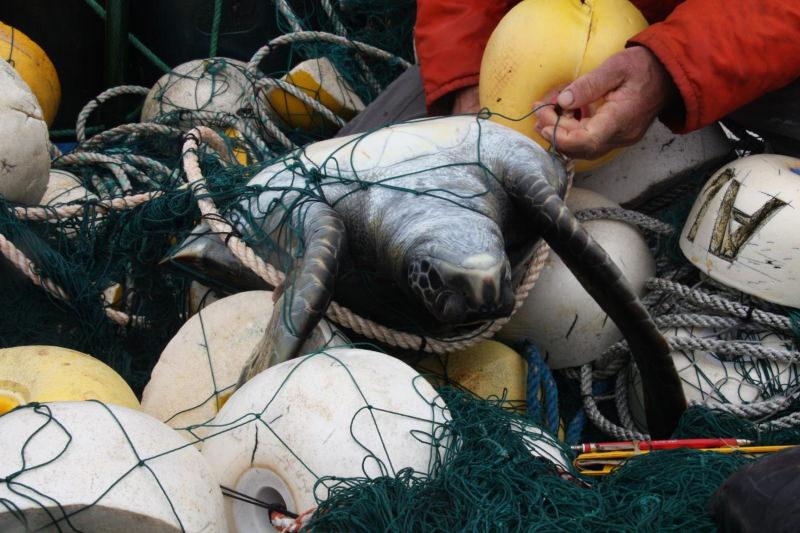 Luzes LED nas redes de pesca salvam tartarugas e golfinhos