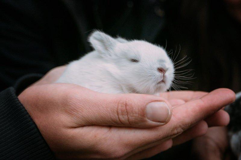 Califórnia, Nevada e Illinois proíbem venda de cosméticos testados em animais
