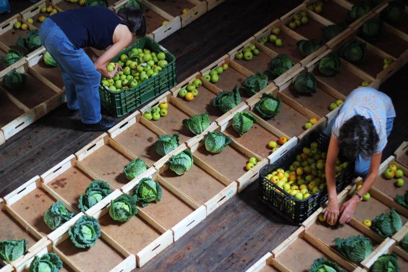 Fruta Feia tirou 2000 toneladas de fruta e legumes do lixo por serem feios