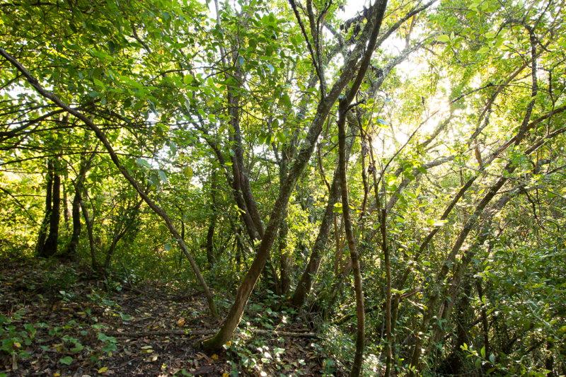 Bio-Reserva Senhora da Alegria, a reserva que nasceu da junção de um grupo de amigos