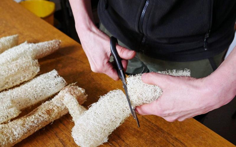 Cultive as suas esponjas vegetais em vez de usar esponjas de plástico, diz National Trust