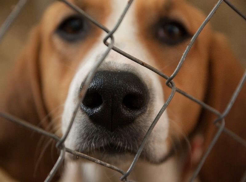 Animais de laboratório passam a poder ser adotados após testes da FDA