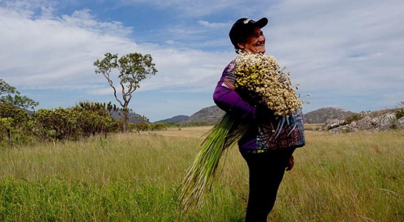 Sistema de colheita de flores sempre-vivas do Brasil torna-se Património Agrícola Mundial da ONU