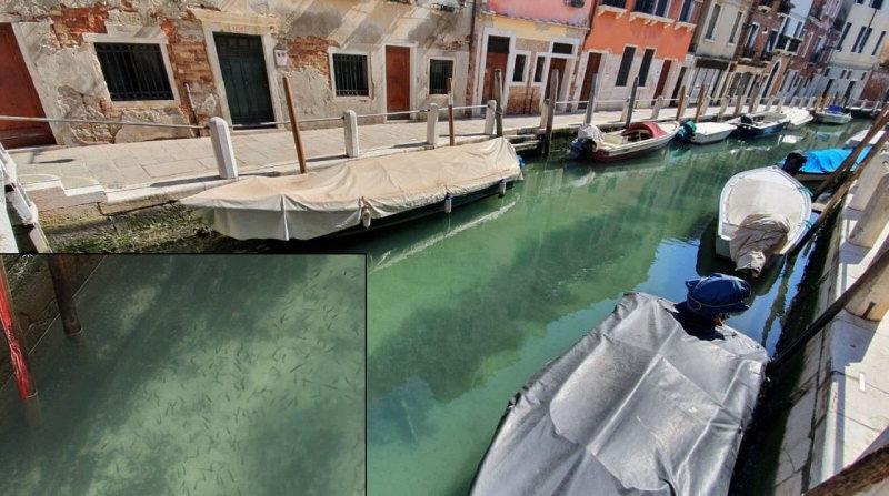 Veneza: canais de Veneza limpos com peixes, cisnes e patos