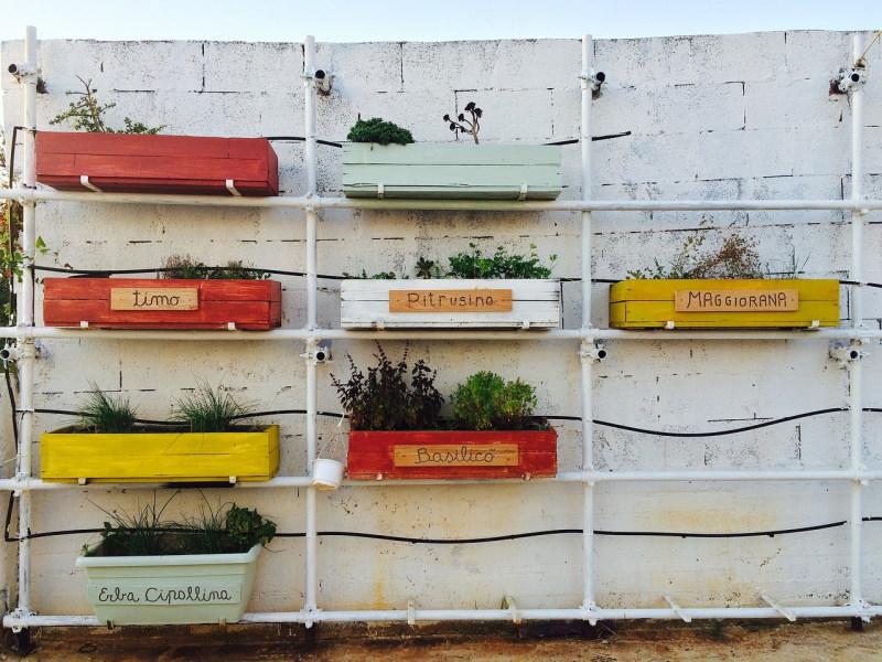 Vamos criar uma horta na varanda?