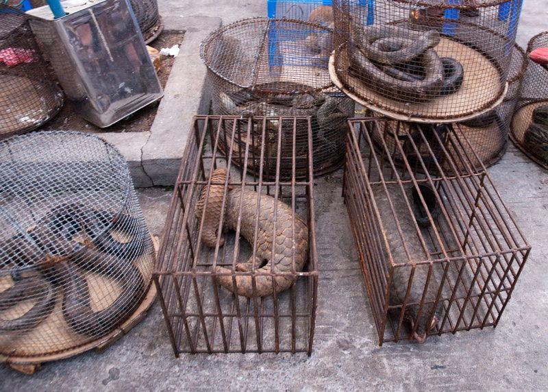 ONU e WWF defendem fim de mercados de animais selvagens para evitar novas pandemias