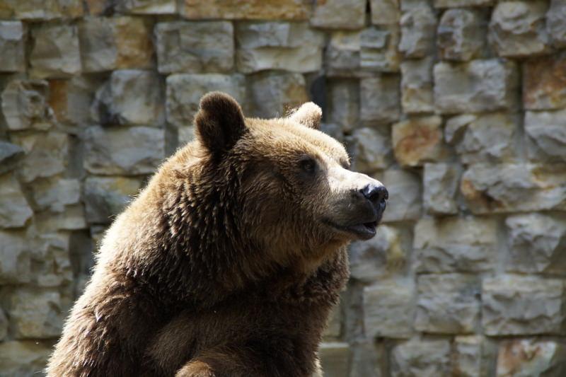 Alemanha: Zoo admite ter de matar animais para alimentar outros