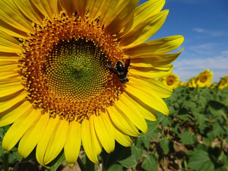 """Portugal aderiu à aliança internacional """"Promote Pollinators"""""""